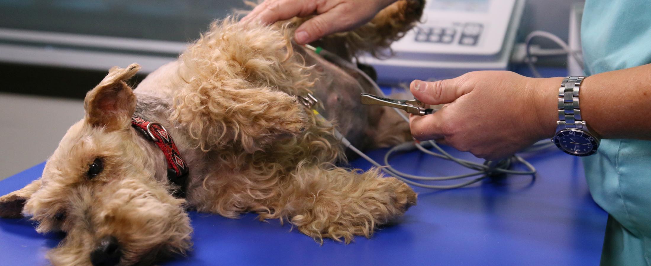clinica-veterinaria-fussionvet-medicina-