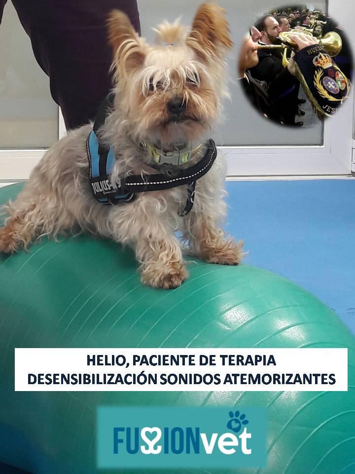 Helio paciente sensibilización a los petarrdos y ruidos