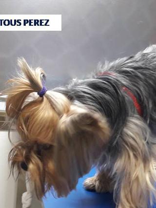 testimonial Tous clinica veterinaria huelva acupuntura