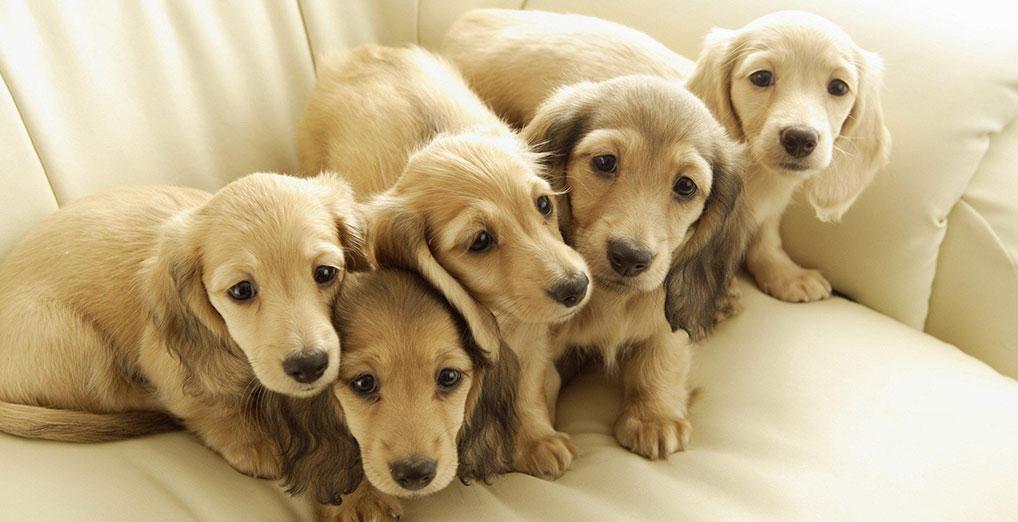 ¿Por qué es tan beneficioso para tu mascota contar con un tratamiento que combine la medicina convencional con la China?